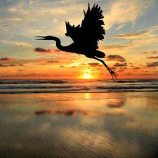 black-bird-sun-428px